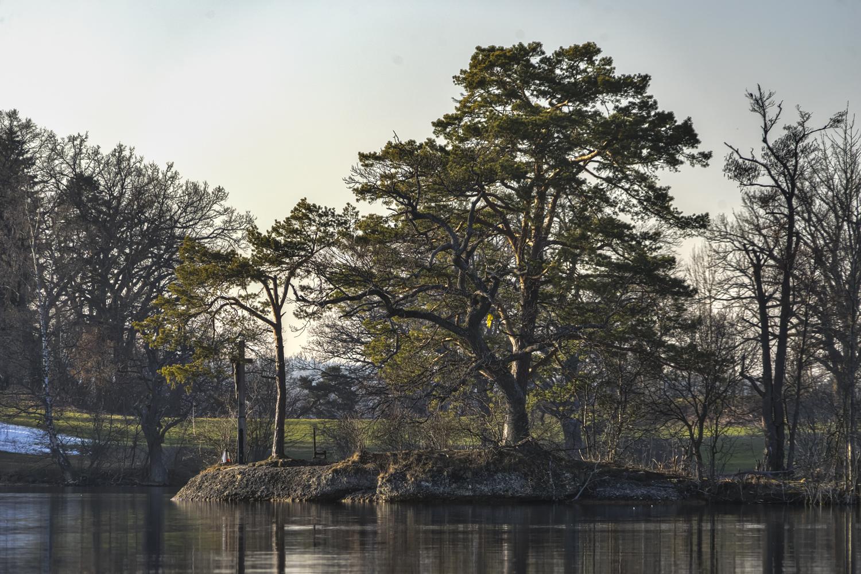 Bäume vor Insel Wörth