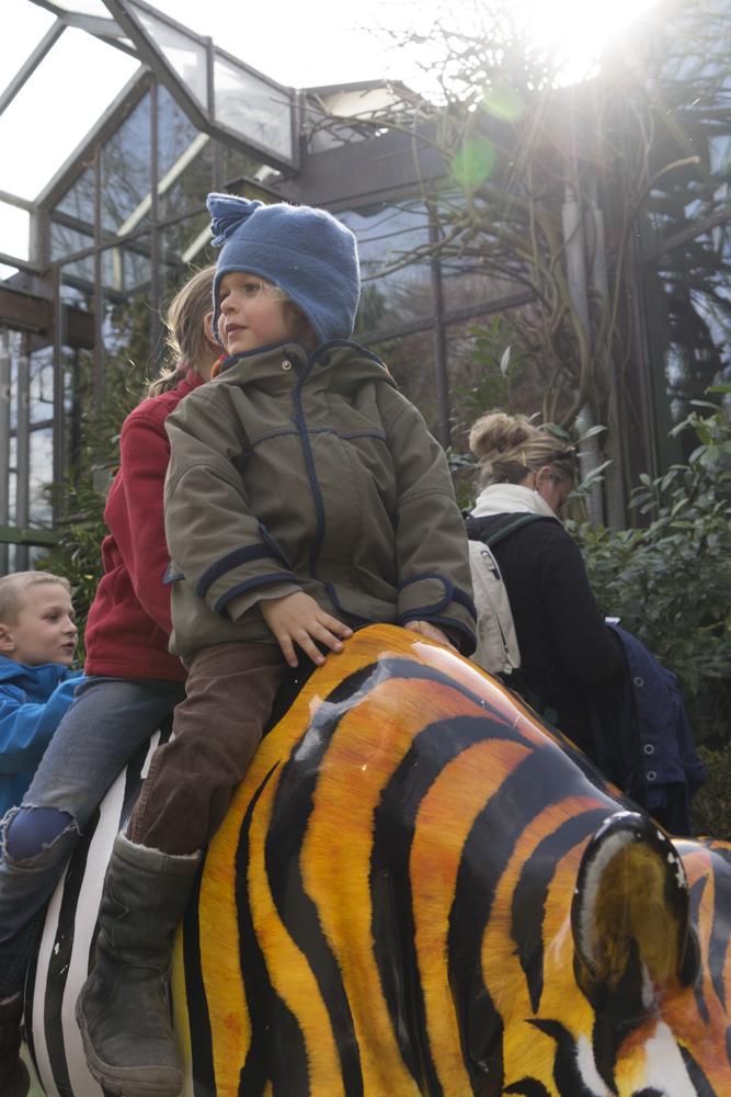 Ritt auf dem TigerZebra