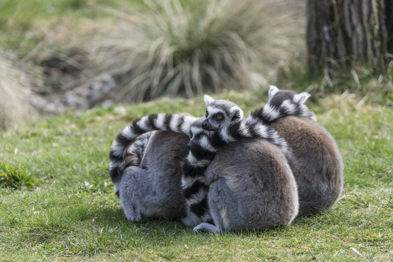 Zoo-Besuche