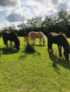 Heste i det grønne..jpg