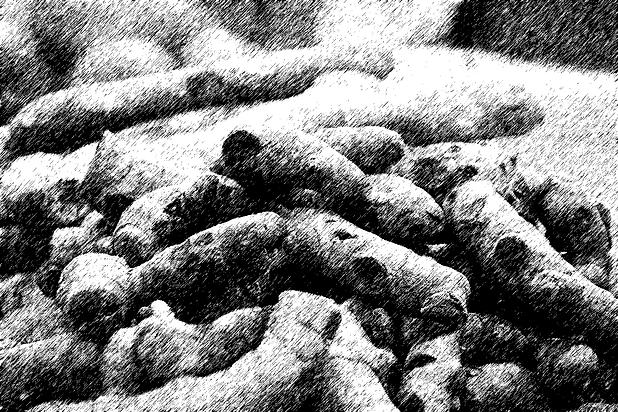 Tumeric-Graphic-Pen.png