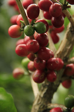 coffee-3911706_1920.jpg