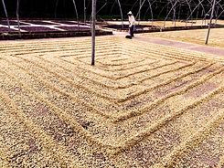 El-Salvador-Farm(1).jpg