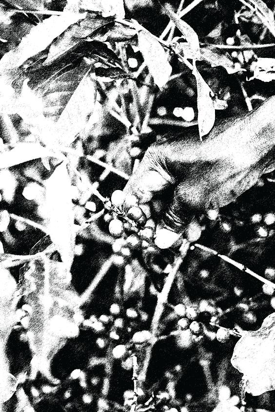 Coffee-Tree-black.png