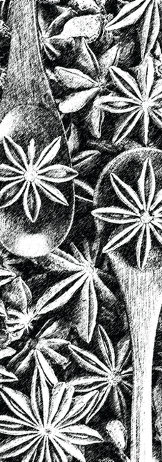 Star-Anise-Black.png