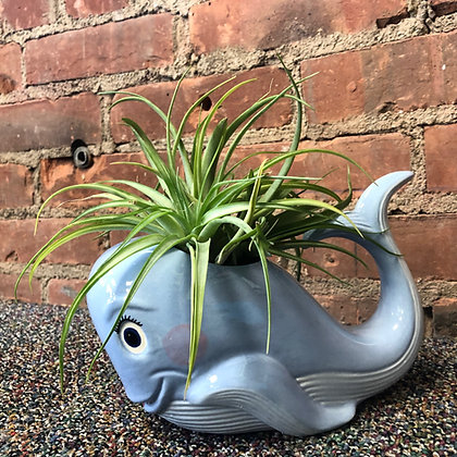 Whale Planter