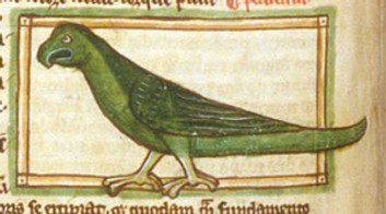 Medieval illuminations rarely depicted species- specific details as this 1236 illumination of a popinjay shows.