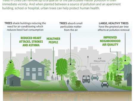 Repost: Don't underestimate the life-saving power of urban trees