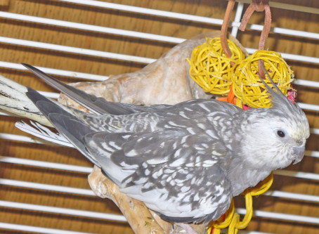 Psittacosis: Not a Death Sentence for Your Bird