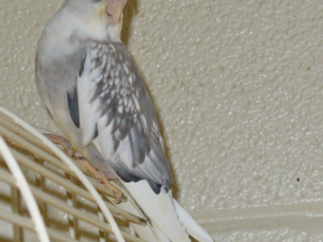 Air Crates For Birds: Specifications