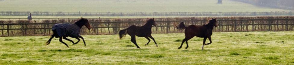 horses-ion-field-web_orig_edited.jpg