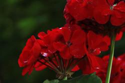 flower_5.jpg