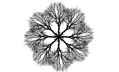 tree-2938948_1920.png