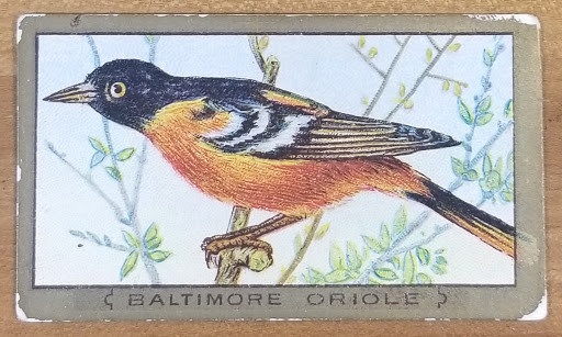 1909-1911 Mecca Cigarettes Bird Series Baltimore Oriole