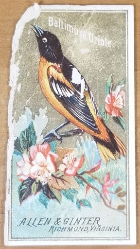 1888 Allen & Ginter Birds of America - Baltimore Oriole