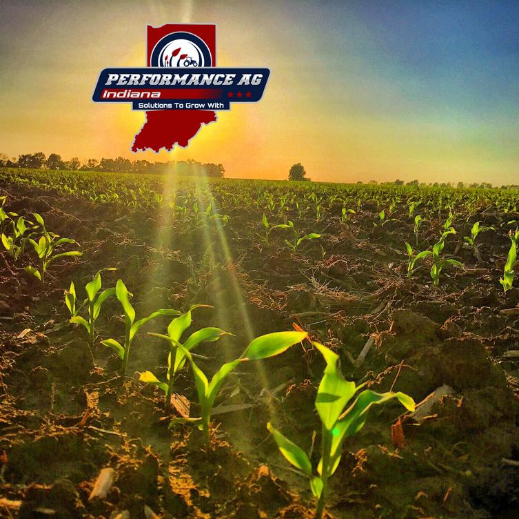 Young Corn at Dawn.PNG