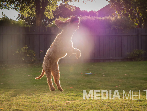 Taking the Best Slow-Motion Video on Your Phone.