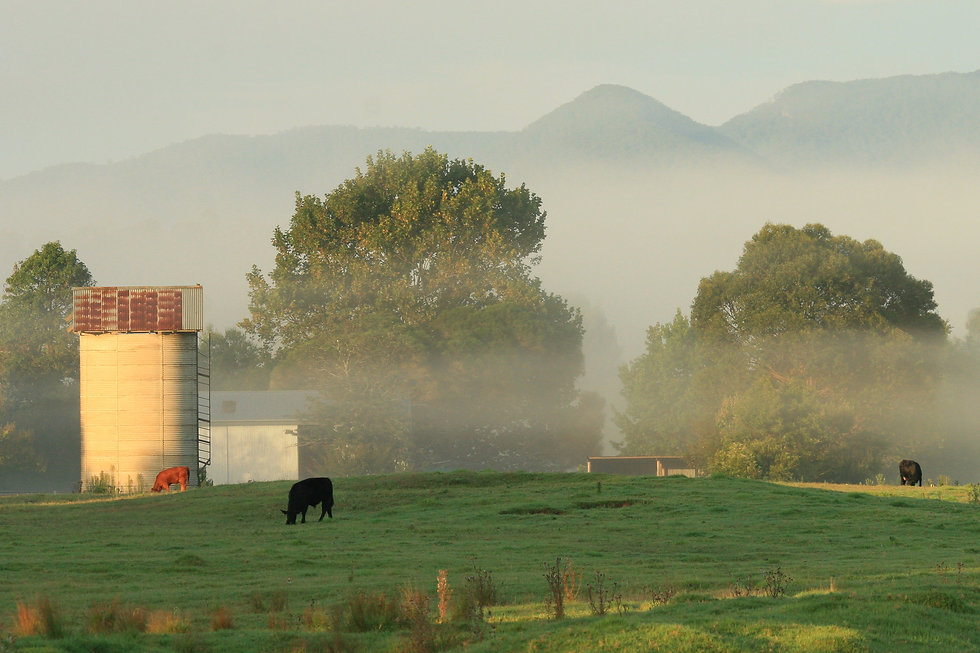 moruya farm.jpg