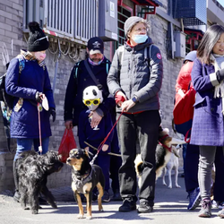 Dog Event Review   Hutong Walk and Lunch