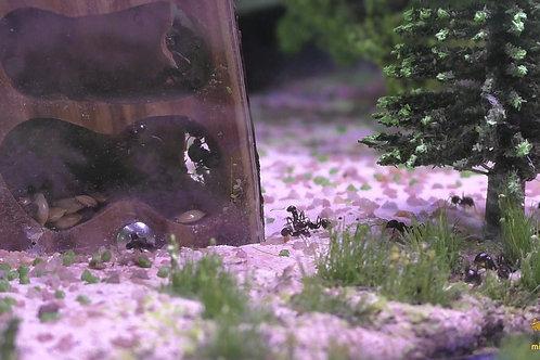 Стенд с колонией муравьёв «Лесная Полянка»