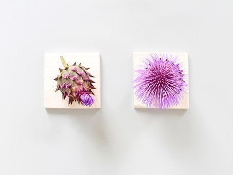 AN ODE TO THE MILK THISTLE
