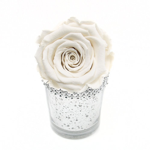 Ivory Forever Rose that lasts a year