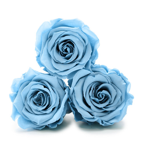 INFINITY ROSES - BABY BLUE