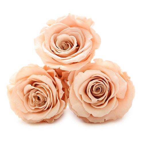 INFINITY ROSES - PEACH