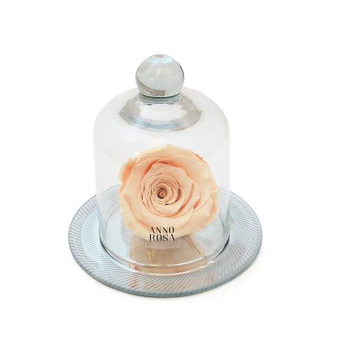GEOMETRIC BELLE SINGLE INFINITY ROSE - PEACH