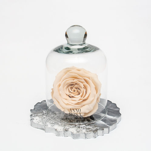 RESIN BELLE SINGLE INFINITY ROSE - CHAMPAGNE