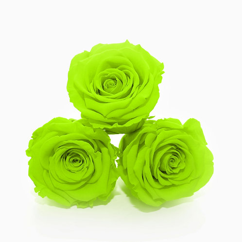 Box of Bright Green Roses