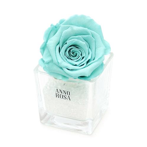 SINGLE INFINITY ROSE - AQUA