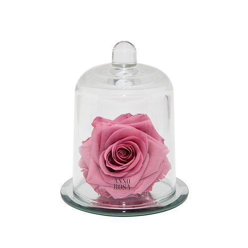 DELUXE CHERRY PINK MIRROR BELLE SINGLE INFINITY ROSE