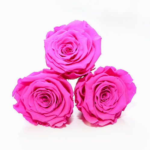 Hot pink roses that will last a year