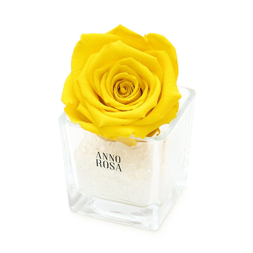 SINGLE INFINITY ROSE - YELLOW