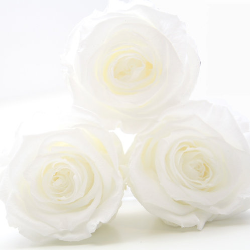White roses that will last a year