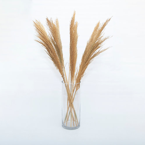 PAMPAS GRASS- PLUMOSA (STEMS ONLY NO VASE)
