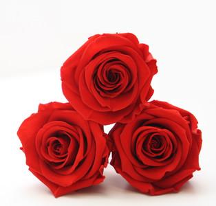 preserved roses, interior design, infinity roses, infinity rose, eternity rose, red roses, forever roses,