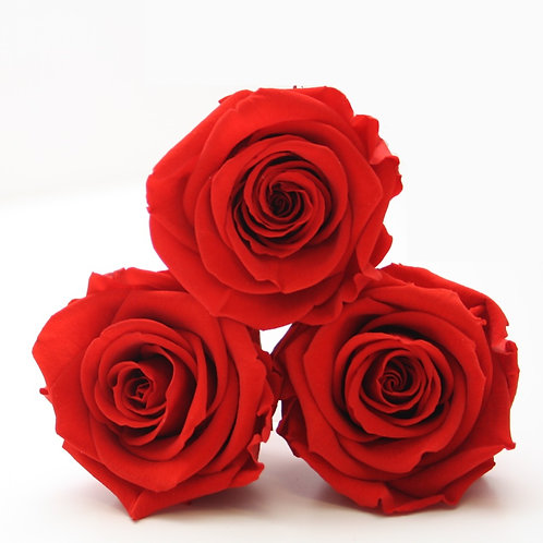 Red roses that will last a year