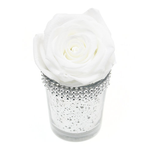 White Forever Rose that lasts a year