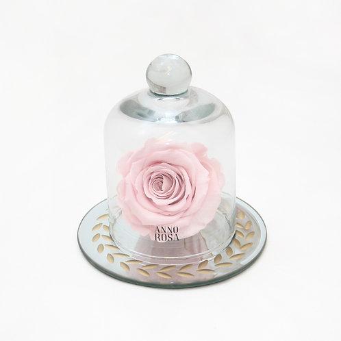 Pink Eternal Preserved Rose that lasts a year