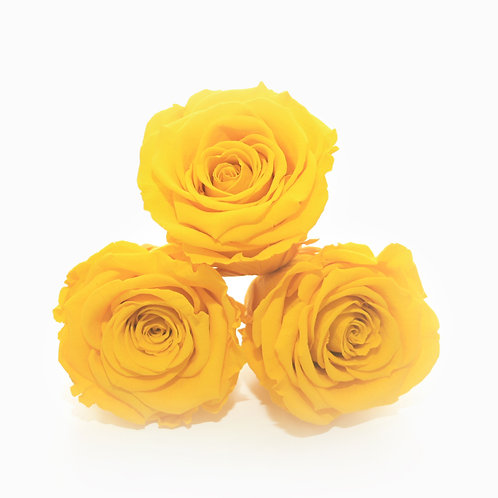 Yellow roses that last a year