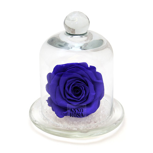 CLASSIC BELLE SINGLE INFINITY ROSE - SAPPHIRE