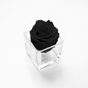 black rose, home decor, home decor, home interior, forever rose, infinity rose, preserved roses, forever rose, year long roses, year long rose, home decor ideas, home interior ideas, home design, first home, first home ideas, home decor ideas