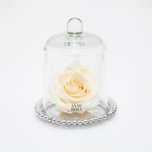 DELUXE CREAM ANTIQUE BELLE SINGLE INFINITY ROSE