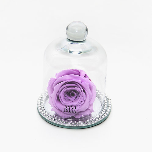 Lilac Rose that lasts a year