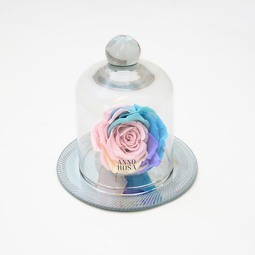 Rainbow Eternal Rose