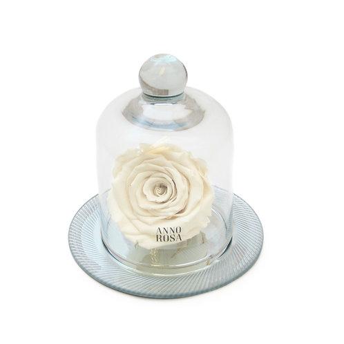 GEOMETRIC BELLE SINGLE INFINITY ROSE - IVORY