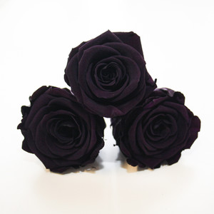 Preserved roses. Year long roses in the colour purple.