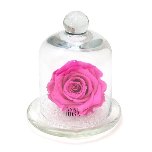 CLASSIC BELLE SINGLE INFINITY ROSE - FUCHSIA